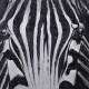 Nya Interieurontwerp Schilderij Zitmaxx Cobra Art Canvas Doek sc-618