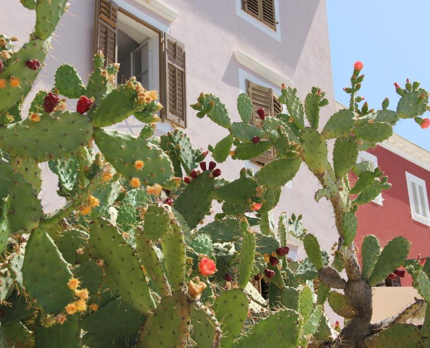 Nya Interieurontwerp Hophuisjes P&O cactussen