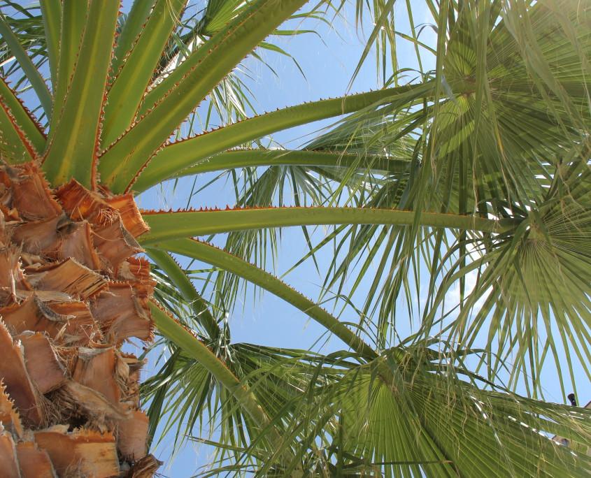 Nya Interieurontwerp Hophuisjes P&O palm